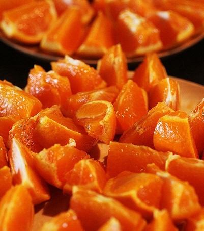 柑橘の世界~春の柑橘大集合編~