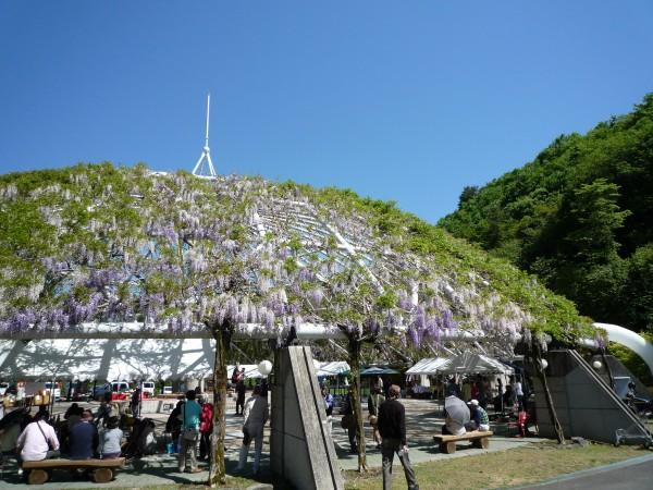 ゆらぎの森パーゴラ藤祭り