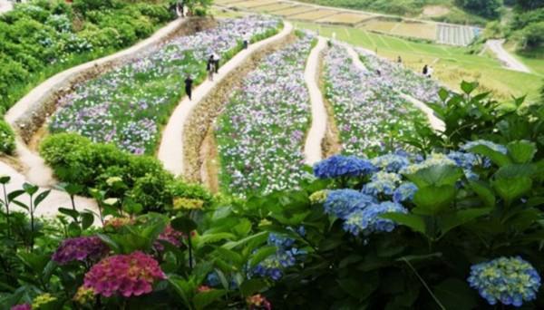 稲積癒しの花祭り