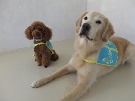 夏休み自由研究企画「介助犬・聴導犬の学校見学会」