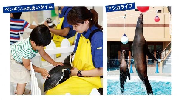 50周年の「みやじマリン」宮島水族館へ行こう