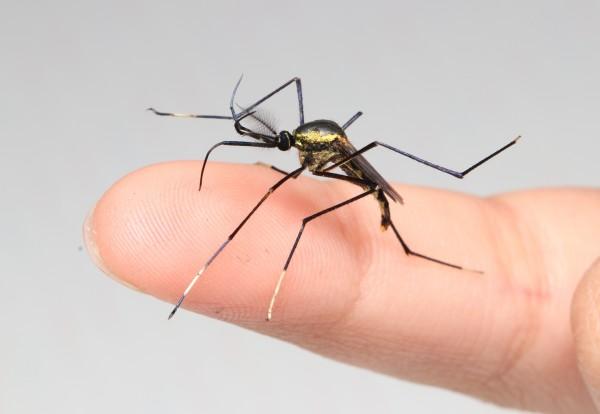 展示解説「大きな虫・小さな虫のはなし」