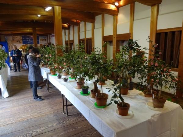 第21回 松山城二之丸つばき名花展