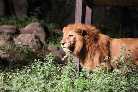 とべ動物園 夜の動物園