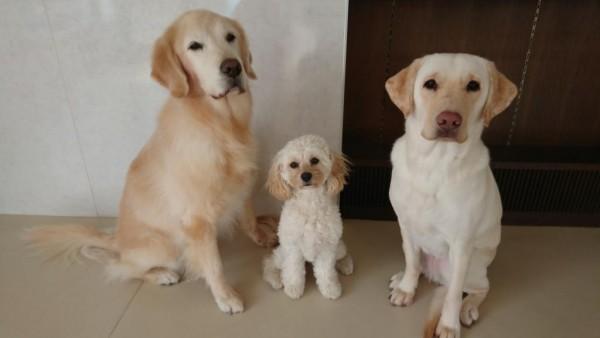 夏休み自由研究企画「介助犬・聴導犬をしろう」