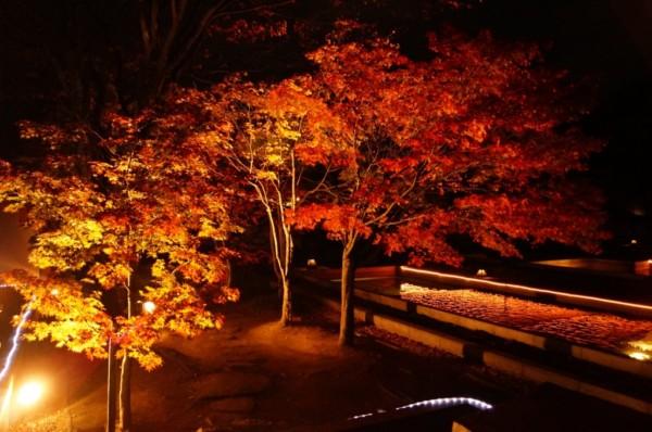 二之丸光の庭園