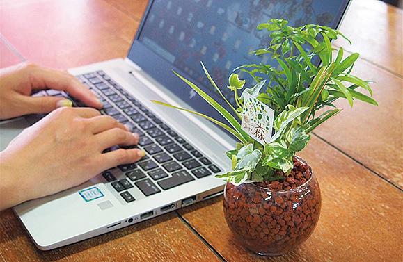 快適さを追求した観葉植物の寄せ植え