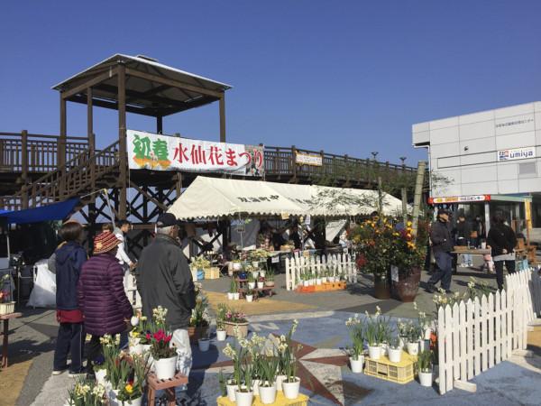 シーサイド初春水仙花祭り