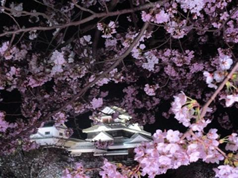 松山城 桜ライトアップ