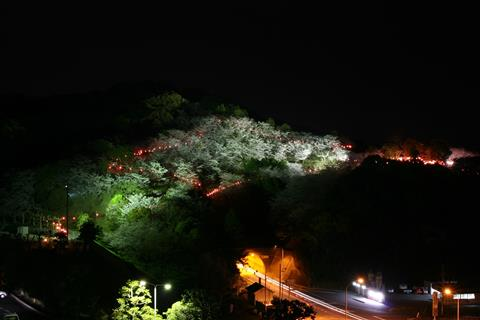※開催中止※大森山桜まつり