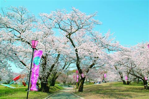 すすきヶ原入野公園のお花見