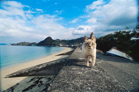 【会期変更】岩合光昭 いよねこ 猫と旅する写真展
