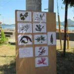 海藻標本づくりin鹿島