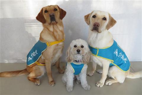 夏休みこども企画「介助犬・聴導犬をしろう」