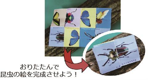 特別展関連ワークショップ「飛べ!昆虫グライダー 解け!昆虫紙パズル」