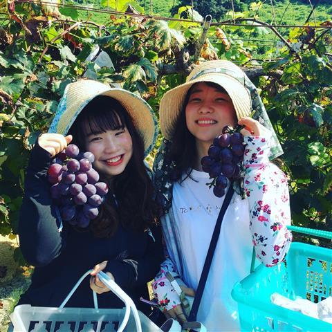戸田果樹園のブドウ狩り
