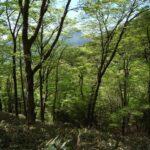 ロビー展「森に親しむ博物館」