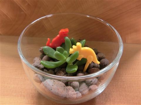 企画展関連ワークショップ「多肉植物で作るテラリウム」