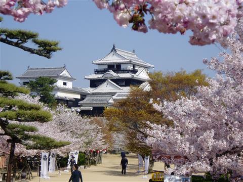 ※開催中止※松山城でお花見