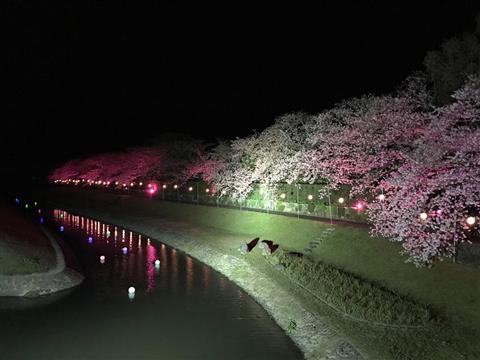日本庭園南楽園 (南楽園外堀桜まつり)