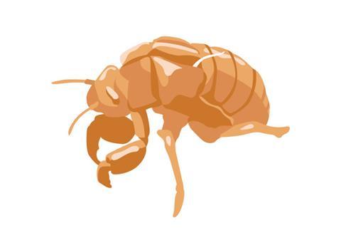 昆虫教室(4)「セミの抜けがら調査(1)」